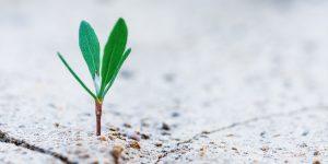 Small Ideas Grow into Big Ideas